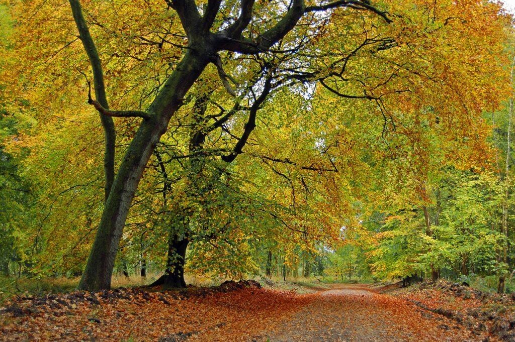 autumn, fall, tree